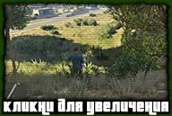nextgen-grass