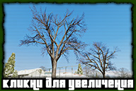 gta-online-north-yankton-046