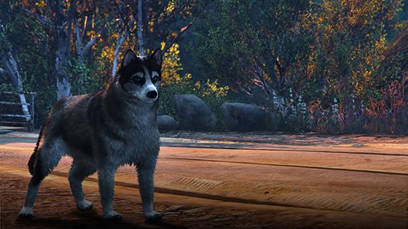 Фотоохота на животных в GTA V